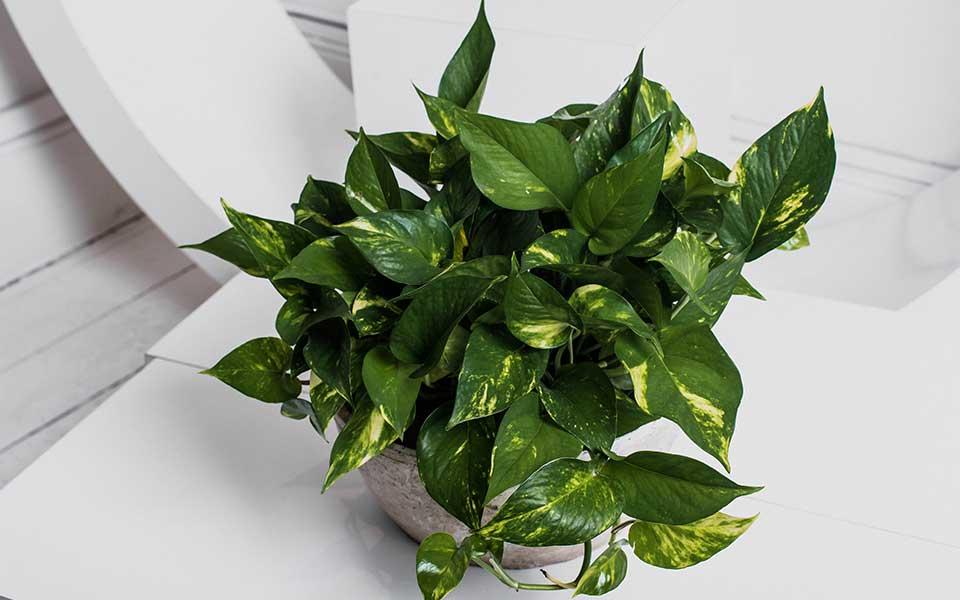 Services-Plants